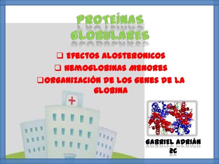  Efectos Alosteronicos    Hemoglobinas MenoresOrganización de los genes de la            globina
