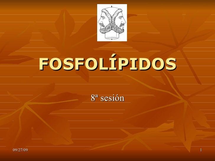 FOSFOGLICERIDOS (fosfolipidos)