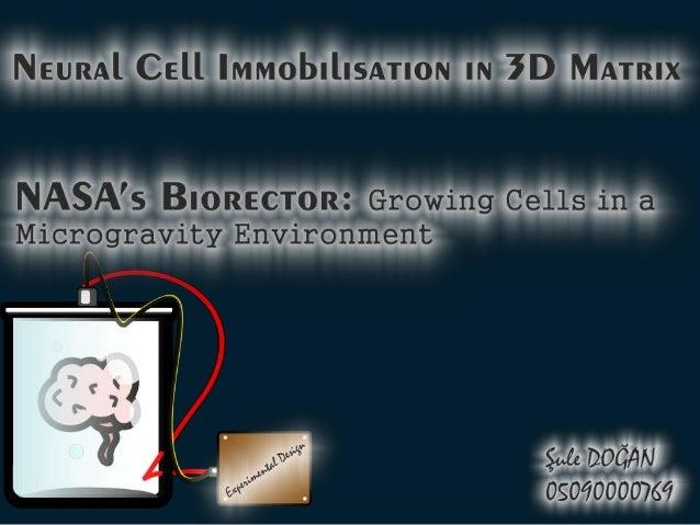 Bioreactor, Sule Dogan