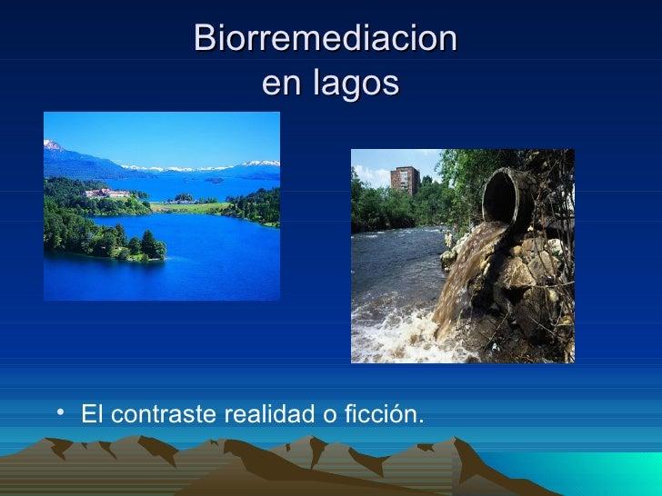 Biorremediacion  en lagos <ul><li>El contraste realidad o ficción. </li></ul>