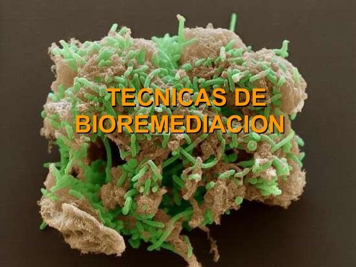 TECNICAS DE BIOREMEDIACION