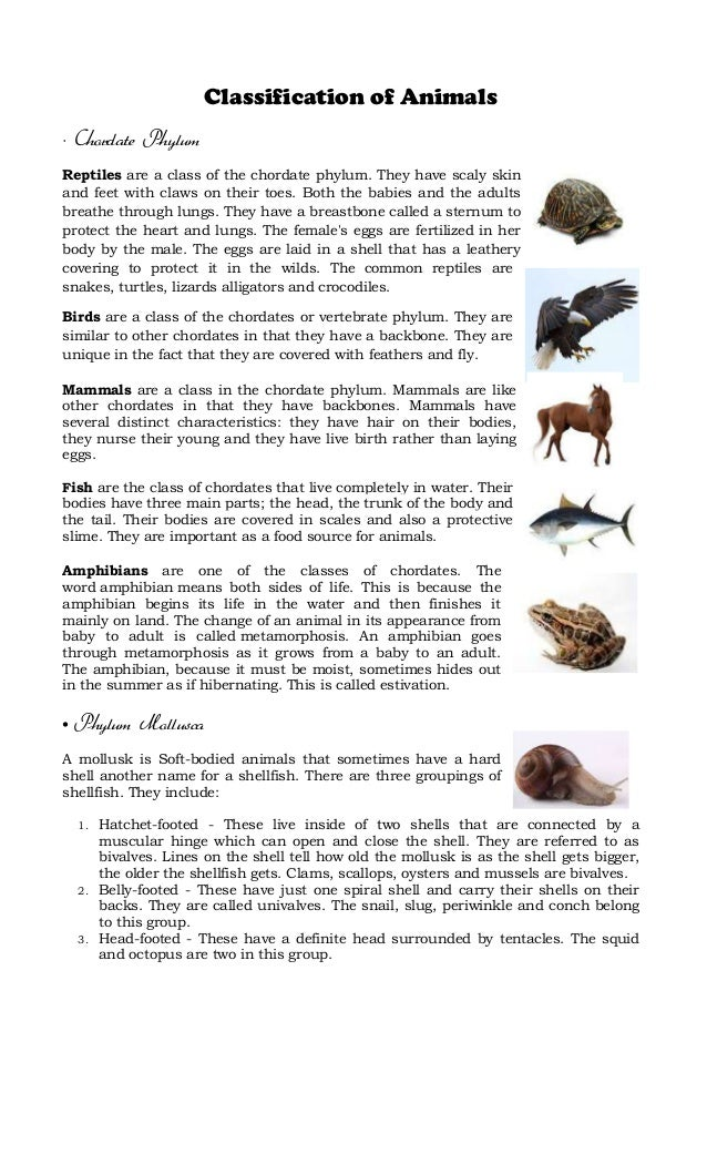 Classification of Animals • Chordate Phylum Reptiles are a class of the chordate phylum. They have scaly skin and feet wit...