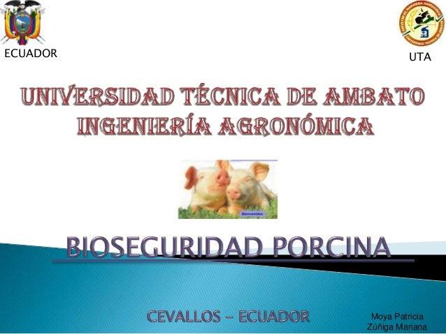 Bioseguridad en cerdos