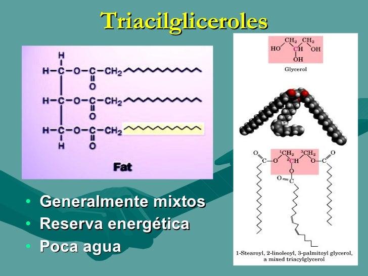 lipidos simples esteroides