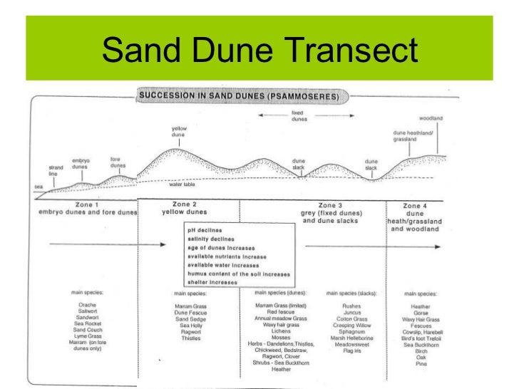 Biosphere : Sand Dune Succession