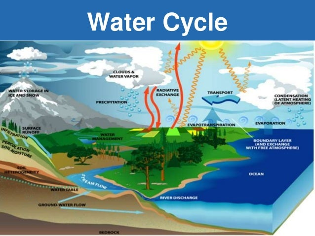 oxygen cycle clipart source abuse report the oxygen cycle source abuse ...
