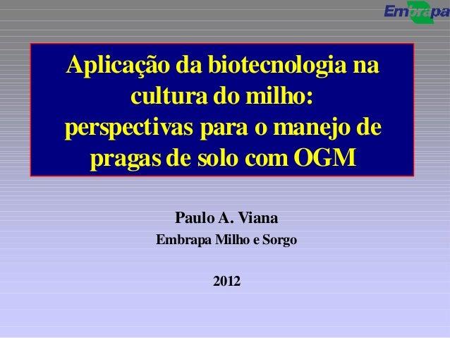 Biossegurança ogm   2012 paulo