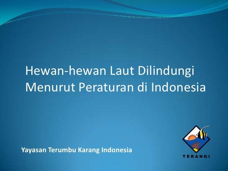Hewan-hewan Laut Dilindungi Menurut Peraturan di IndonesiaYayasan Terumbu Karang Indonesia