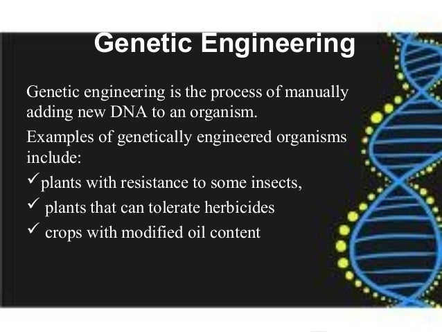 the importance of genetic engineering Genetic engineering or modification is a novel science with an insufficient track record of safety few things can be more important than ensuring the future availability of our food supply genetic engineering (ge) or genetic modification.