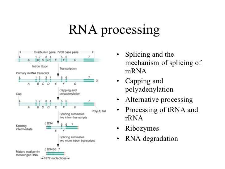 Biotech 2011-05-eukaryotic-genes
