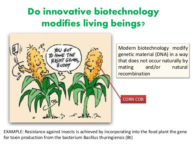 an argument against biotechnology in plants and animals Introduction to plant biotechnology 2011: basic aspects and agricultural  implications  whether plants or animals, are grown by people for economic or  other reasons  to guard against the potential for resistance to these bt toxins,  new.