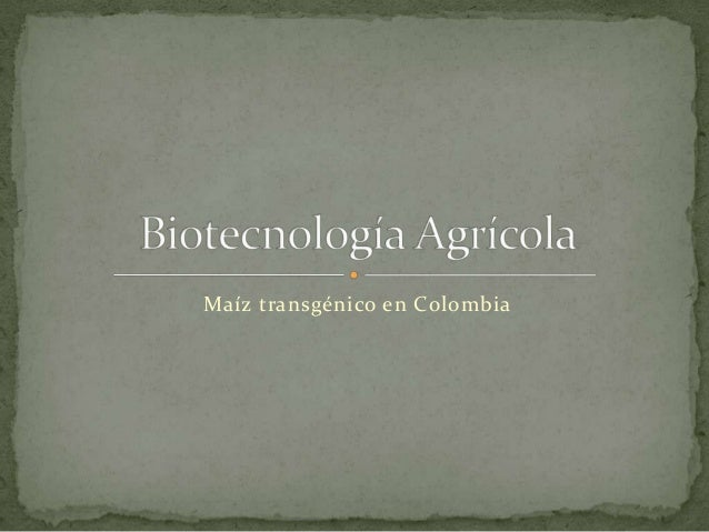 Maíz transgénico en Colombia