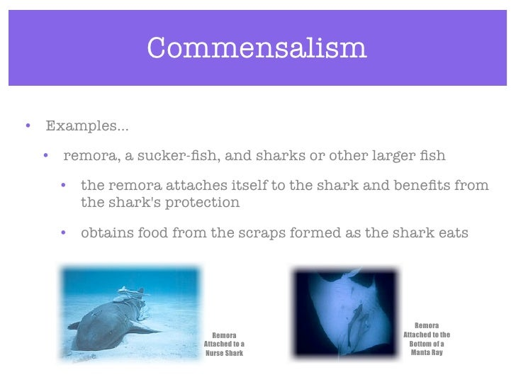 Example of commensalism relationship commensalism examples