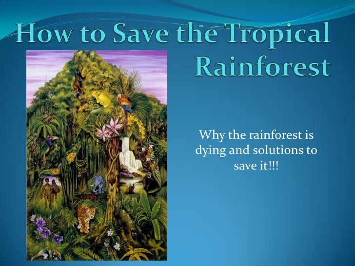 How to Save the Tropical Rainforest<br />Why the rainforest is dying and solutions to save it!!!<br />
