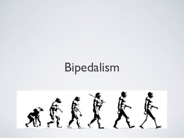 bipedalism thesis Theories of the origin of bipedalism in hominids bipedalism is to the ability to travel on two legs as a main form of locomotion early hominids evolved.