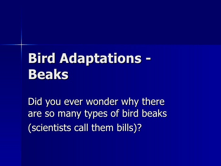 Bird Adaptations - Beaks Did you ever wonder why there are so many types of bird beaks (scientists call them bills)?