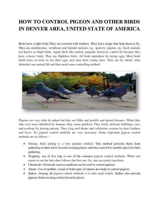 Bird Control Methods - Pigeon Repellent, Trapping & Removal In United States