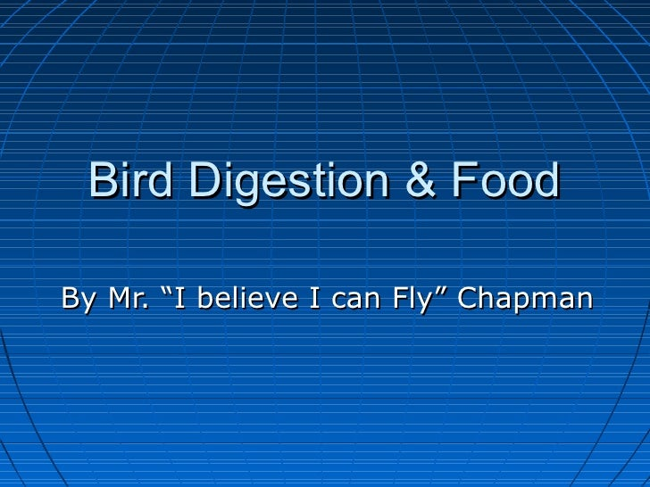 """Bird Digestion & FoodBy Mr. """"I believe I can Fly"""" Chapman"""