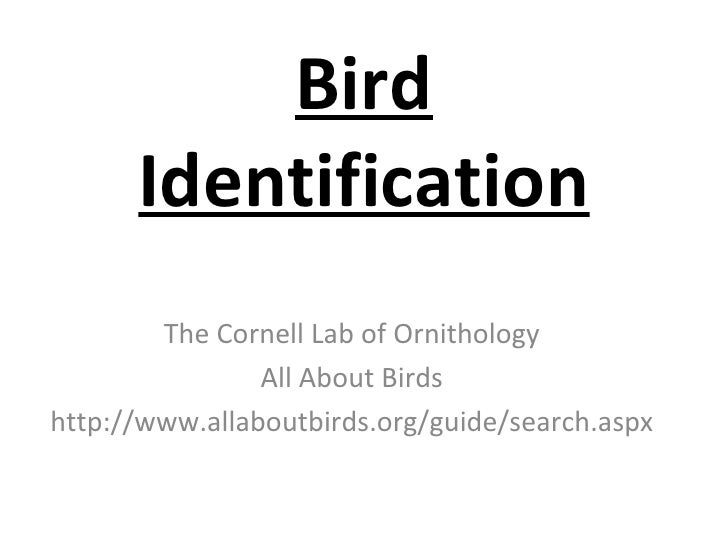Bird Identification The Cornell Lab of Ornithology All About Birds http://www.allaboutbirds.org/guide/search.aspx