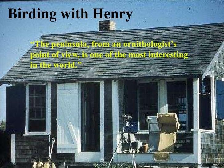 Birding With Henry Beston
