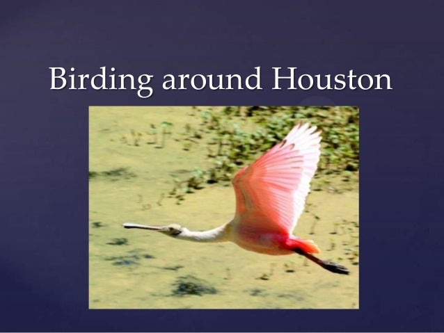 Birding around Houston