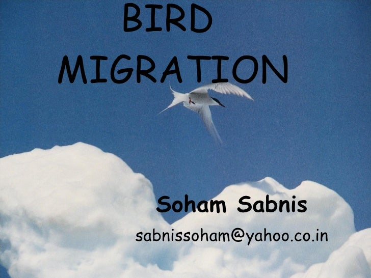 BIRD  MIGRATION Soham Sabnis [email_address]