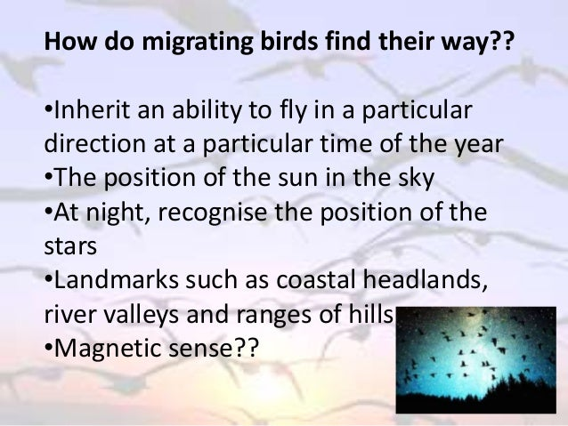 reaction paper: migratory birds essay Yin zihan jan 22, 2013 english birds migration birds are flying creatures that like to stay in warm places the movement of birds flying from one place to another is called migration.