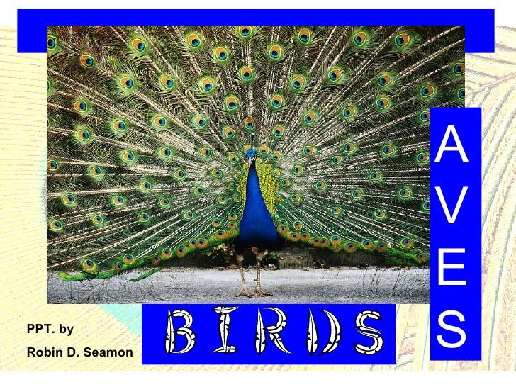 AVES PPT. by  Robin D. Seamon