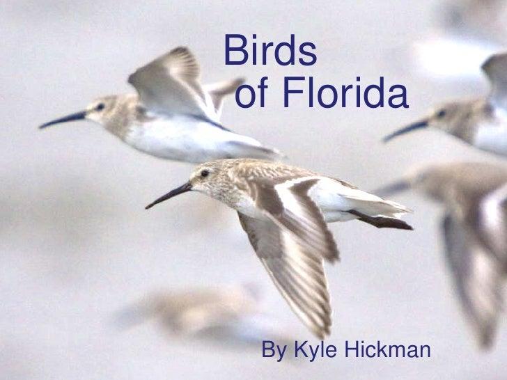 Birds   of Florida By Kyle Hickman