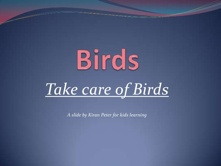 Take care of Birds   A slide by Kiran Peter for kids learning
