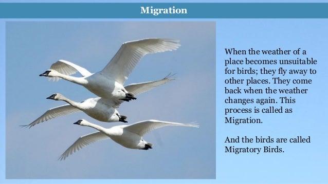 "Essay on ""Birds"" (500 Words)"