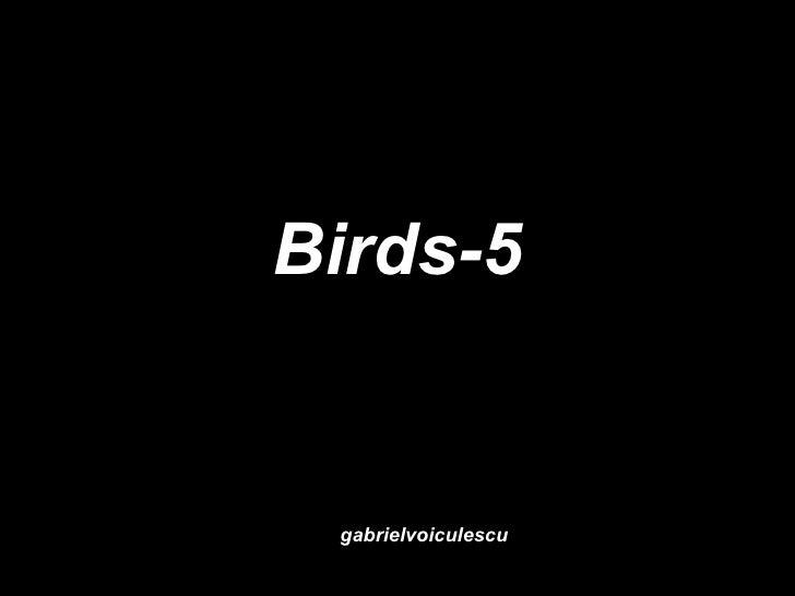 Birds-5 gabrielvoiculescu