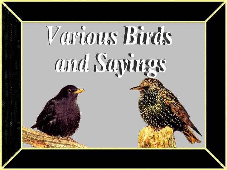 Birds And Sayings