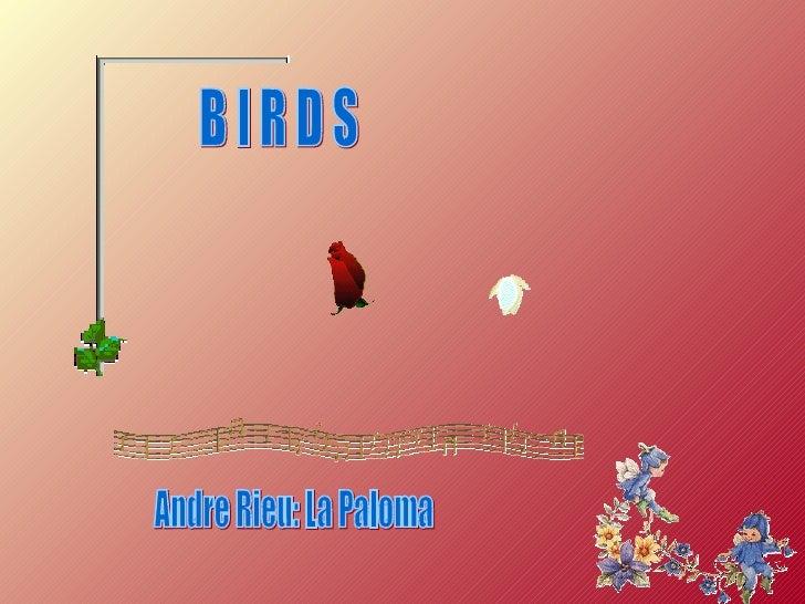 B I R D S Andre Rieu: La Paloma