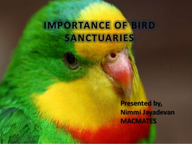 IMPORTANCE OF BIRD   SANCTUARIES            Presented by,            Nimmi Jayadevan            MACMATES