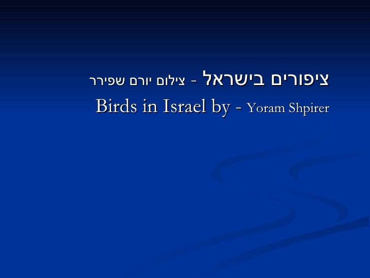 <ul><li>ציפורים בישראל  -  צילום יורם שפירר </li></ul><ul><li>Birds in Israel by -  Yoram Shpirer </li></ul>