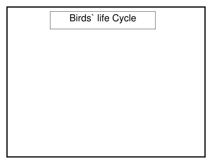 Birds` life Cycle