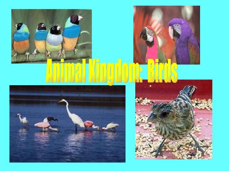 Animal Kingdom:  Birds