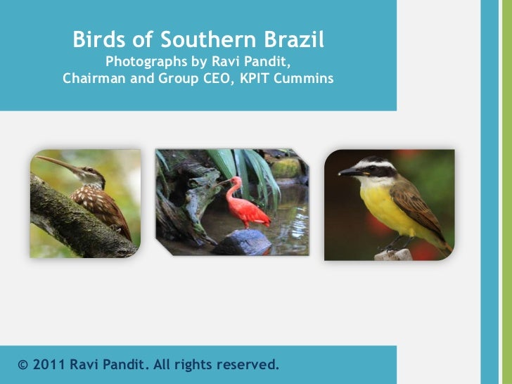 Birds of Southern Brazil<br />Photographs by Ravi Pandit,<br />Chairman and Group CEO, KPIT Cummins<br />© 2011 Ravi Pandi...
