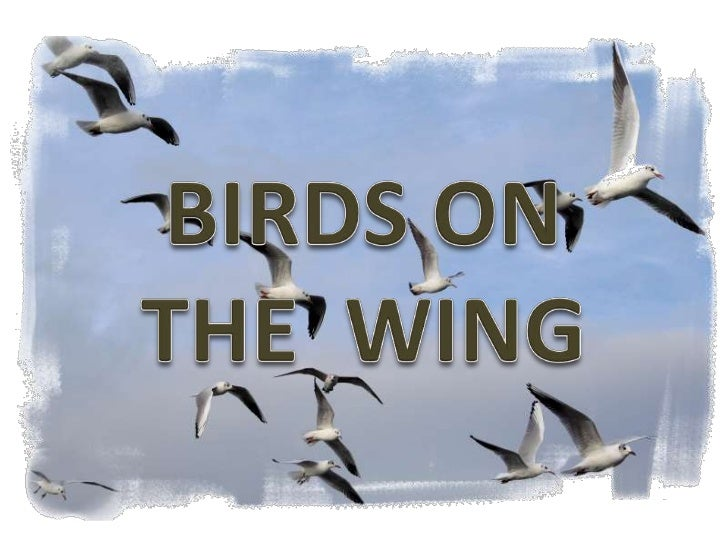 BIRDS ON<br />THE  WING<br />