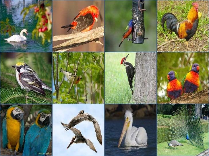 Birds Presentation