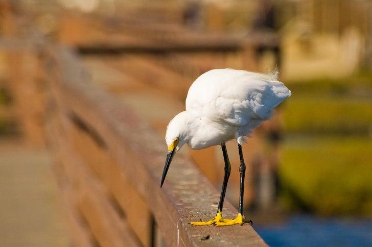 Birds & Sea