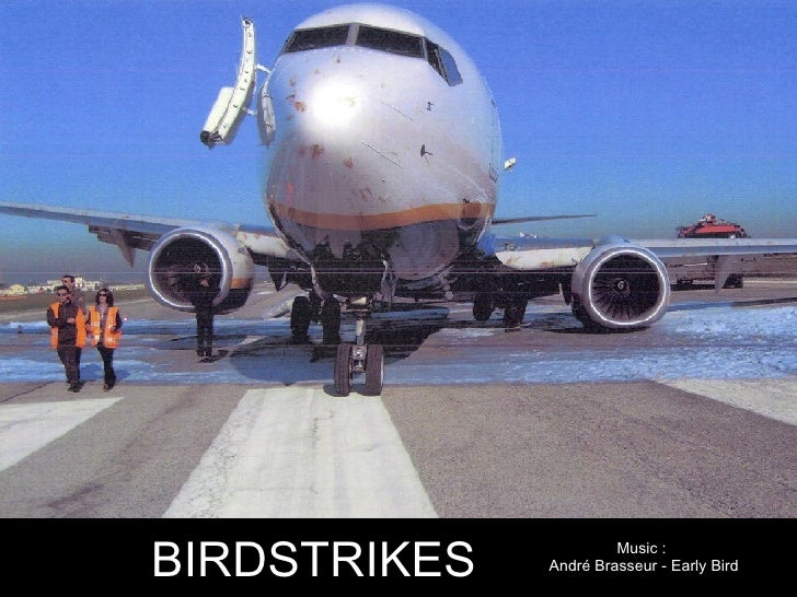 Bird Strikes
