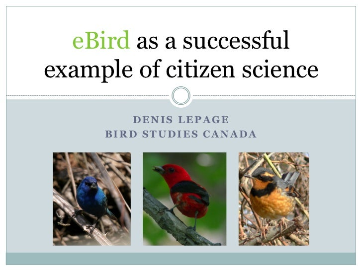 eBird as a successfulexample of citizen science        DENIS LEPAGE     BIRD STUDIES CANADA