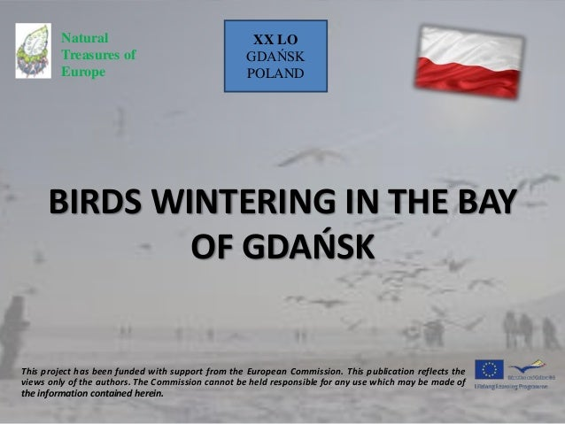 BIRDS WINTERING IN THE BAY OF GDAŃSK This project has been funded with support from the European Commission. This publicat...
