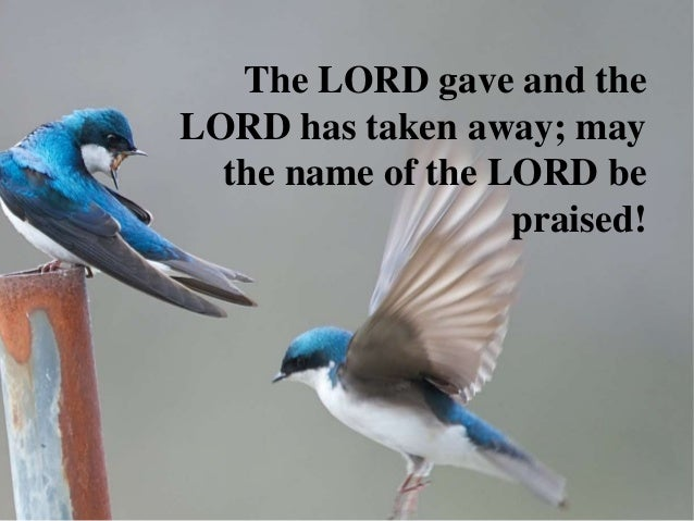 The LORD gave and theLORD has taken away; may  the name of the LORD be                   praised!
