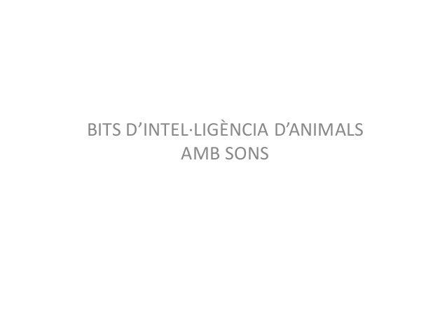 BITS D'INTEL·LIGÈNCIA D'ANIMALS AMB SONS