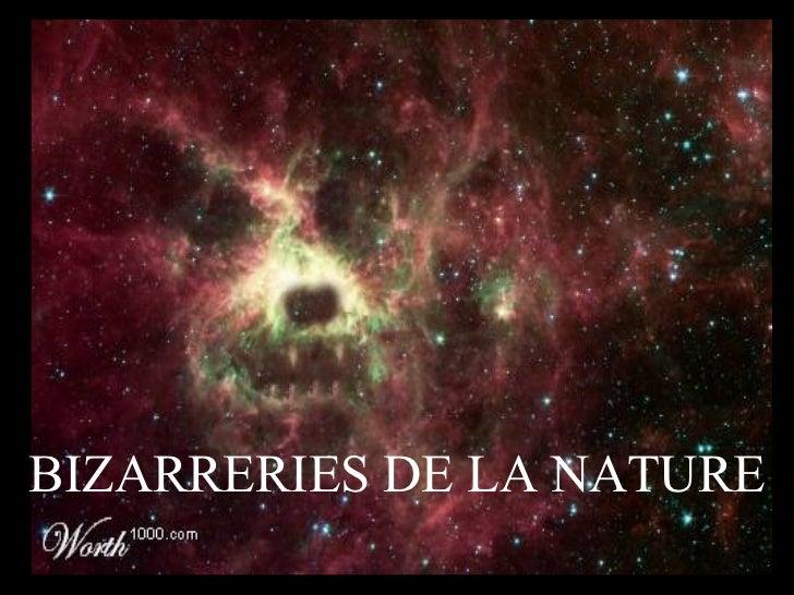 Bizarre Wunder der Natur