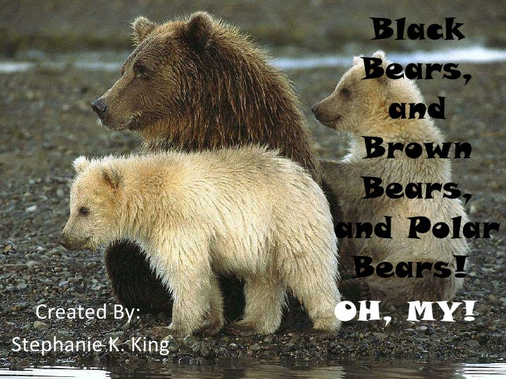 Black Bears, and Brown Bears, and Polar Bears!  Created By:  Stephanie K. King OH, MY!