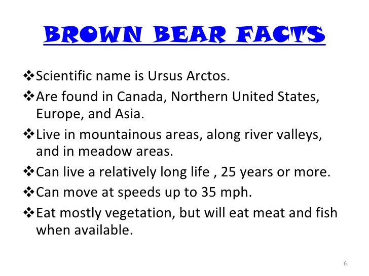 brown bear research paper Brown bear deaths in alaska were the result of aggressive proved promising, so research trials were conducted involving captive bears (hunt 1984) rogers.
